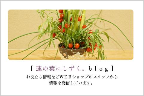 蓮の葉にしずく。blog