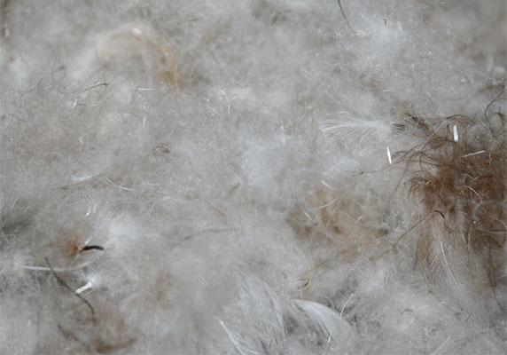 低質な羽毛布団の中身