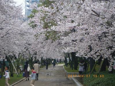 2017桜-1