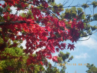 2015紅葉―三瀧寺1