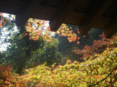 2015紅葉―三瀧寺2