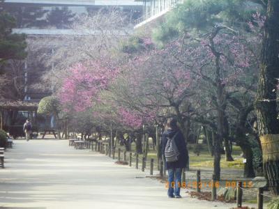 2016縮景園の梅