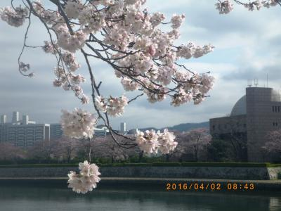 2016桜