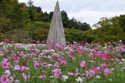 秋の花2013