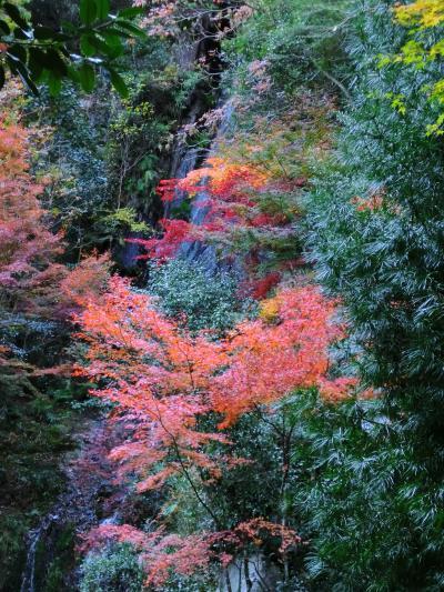 2013紅葉三滝