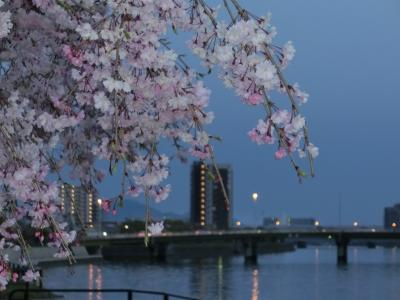 2014しだれ桜-4