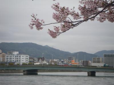 2015桜(ソメイヨシノ)-1