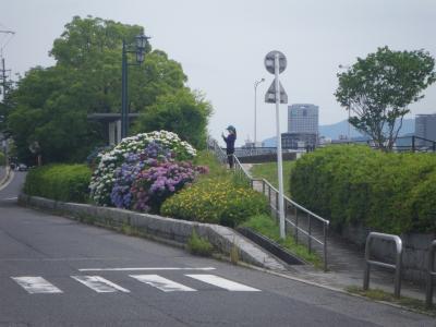 あじさい2015―広島かきうち通り、遠景